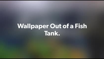 Wallpaper Out of Fish Tank | Quarantine Mobile Photography Idea