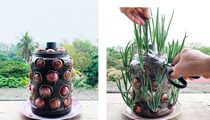 Growing Onions in Container