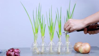 Easy Growing Plants