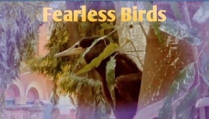 fearless birds bharat pathik birds feeding Nestle Indian birds