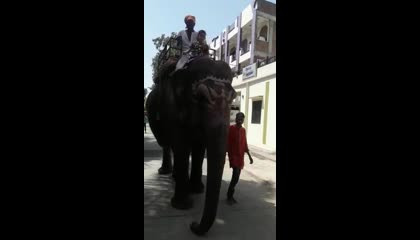 LITTLE GIRL RIDING ON ELEPHANT 🐘