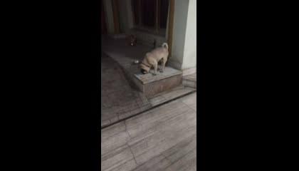 CAT DOG VIDEO