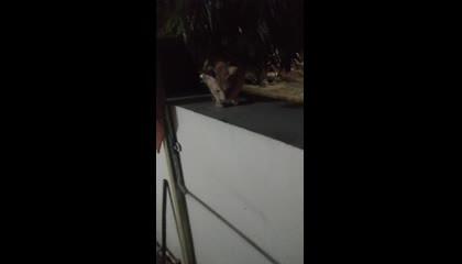 Cat sit on wall : barish se bachane ke liye diwar par Chad gayi hai