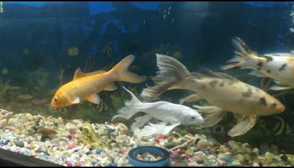FISH AQUARIUM VIDEO