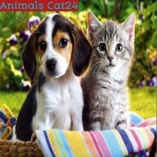 Animals Cat24