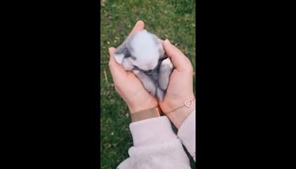 Cute baby animals Complition every day change her behaviour