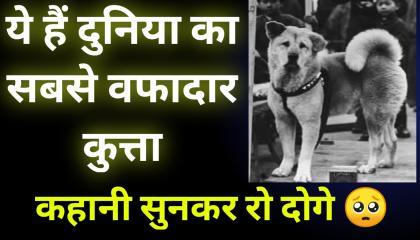 दुनिया का सबसे वफादार कुत्ता।🙏👌 hachiko dog. story of hachiko. thisisrk hachiko