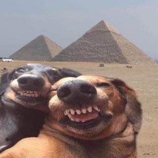 funny animals life