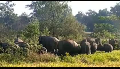 हाथीयों के झुंड ने किया ग्रामीणों पर हमला ।।