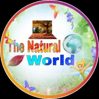 15M The Natural World
