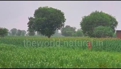 Indian Village Crops  Beautiful Crops  Village View nature crops village