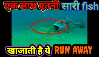 Fact about giant fish/hindi/in Short