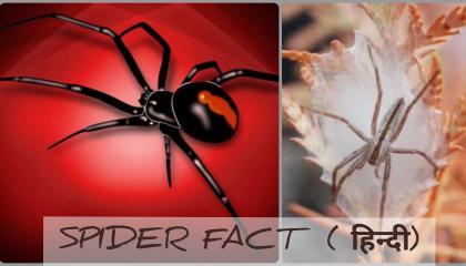 Interesting Facts About Spiders !मकड़ियों के बारे में दिलचस्प तथ्य  Knowledge Based Video