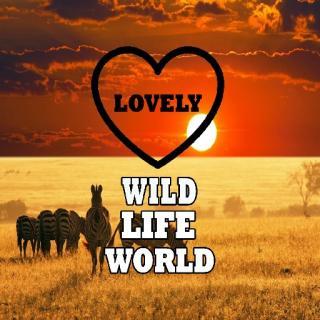 Wild Life World