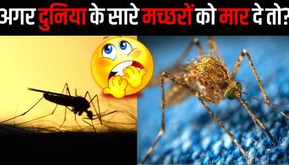 दुनिया के सारे मच्छरों को मार दे तो क्या होगा? DUNIYA KE SARE MACHHARO KO MAAR DE TO KIYA HOGA?