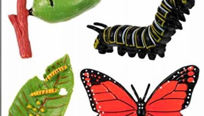 देखिये एक सुंदर तितली कैसे बनती