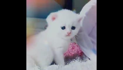 New best cute tadddy video... best whatsapp stetus...