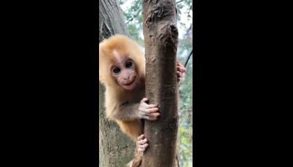 Cute Monkey  wildnature