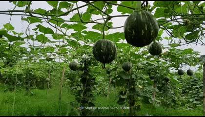 indian farming