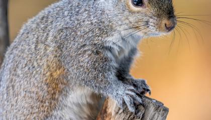 Amazing Little Squirrel Feed Entertainment Video