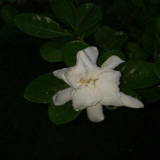 అనిల్ కుమార్ రెడ్డి