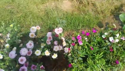 village small nursery//beautiful flowers