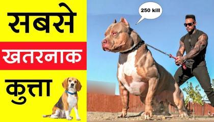 ये है दुनिया का सबसे खतरनाक कुत्ता
