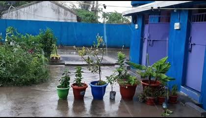 Rain in my Garden