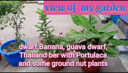My garden Overview.  40 + plants name and images in English.