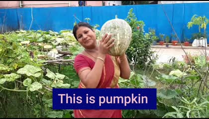 Pumpkin in kitchen garden  Growing and caring tips  How to grow Pumpkin in your kitchen garden