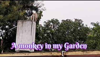 A monkey in my Garden
