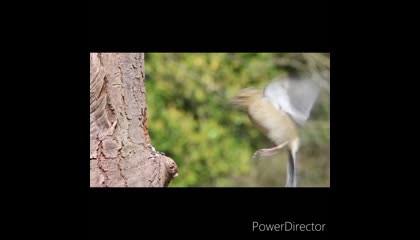 save birds save environment