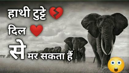 टुटे💔 दिल से हाथी मर सकता है 😯 facts trending factsvideo