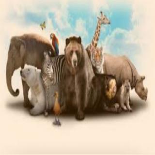 Animals ki duniya