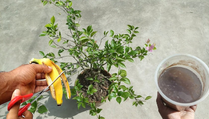 Easy and free fertilizer for any plants