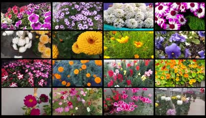 শীতকালীন ২৮ রকমের ফুল গাছ  শীতকালে কি ফুল গাছ করবেন  Top 28 Winter Flowers