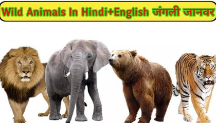 wild animals in english and hindi with pdf/जंगली जानवरों के नाम/wild animals na