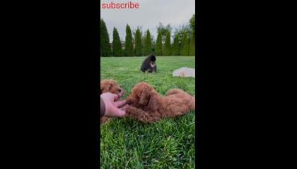 Cute Dogs video