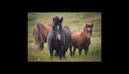 आखिरकार घोड़ा कभी जमीन पर बैठता है या लेटता क्यों नहीं है