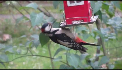 Amazing Bird Eating House