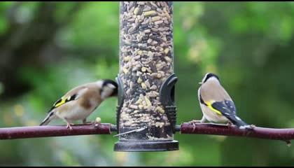 Birds Eat House