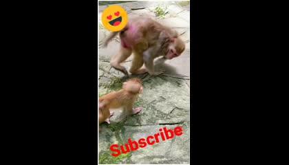Mother Monkey ❤️❤️
